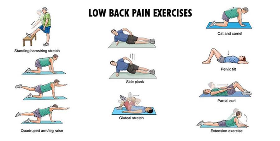 muscle exercise lower back muscle exercise